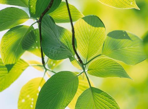 grren-leaves